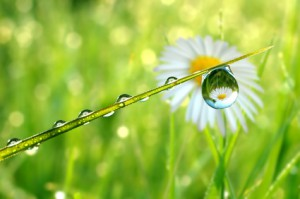 Klassische Homöopathie Overath; Heilpraktiker Praxis