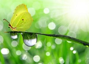 Spirituelle Psychotherapie, Spirituelles Coaching